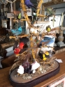 Taxidermy Birds of Paradise - picture 6