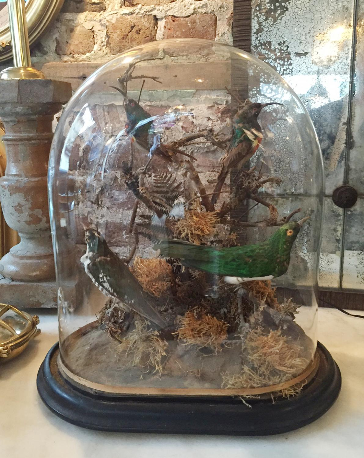 Exotic Birds in Large Glass Dome